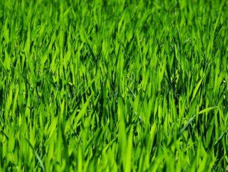 Rasenbegrenzung durch Rasenkante aus Kunststoff